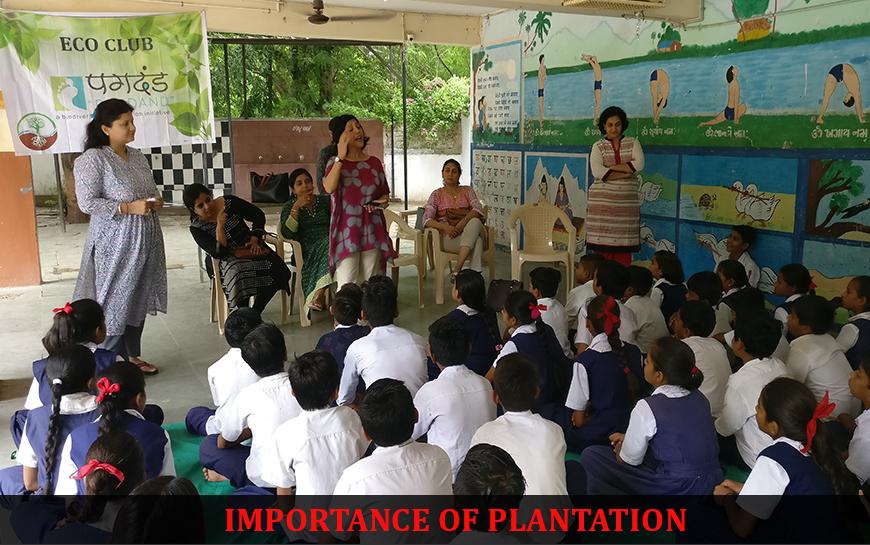 Plantation pagadand